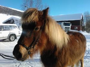 Hest i solskinn
