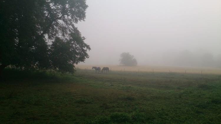 Hester i tåke