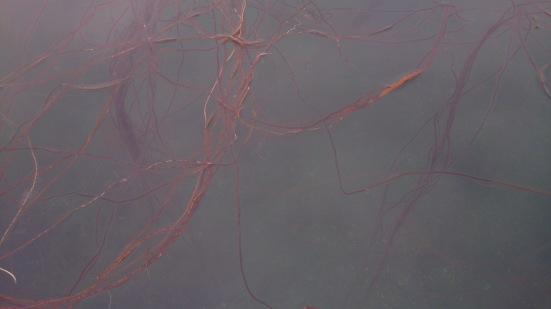 tråder i vann