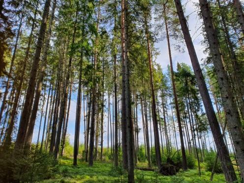 Se skogen for bare trær